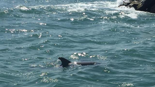 Tingkatkan Ekowisata, India Hadirkan Safari Lumba-lumba di Sungai Gangga (397980)