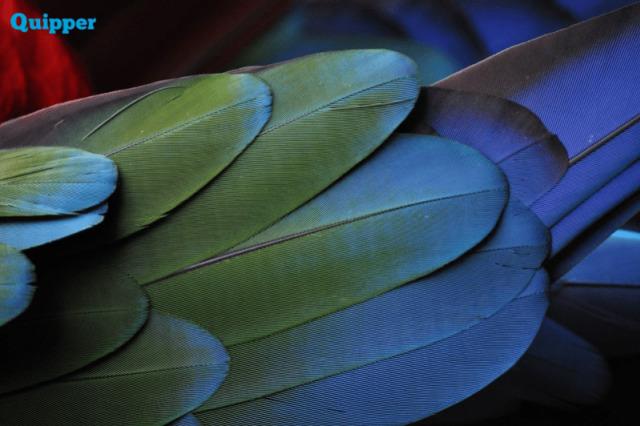 Menguak Simbol Simbol Pada Garuda Pancasila Kumparan Com
