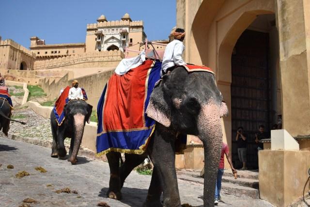 Menjelajahi Amer Fort, Benteng Berarsitektur Megah di Jaipur, India  (399445)