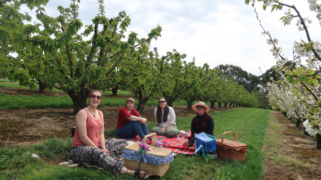 Piknik di Australia: Pilih ke Kebun Ceri atau Tulip? (63322)