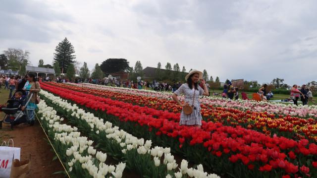 Piknik di Australia: Pilih ke Kebun Ceri atau Tulip? (63324)