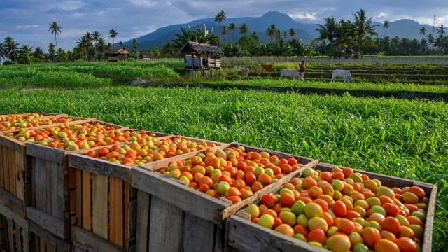 Doni Monardo Usul Pemudik Diberi Pekerjaan: Pertanian, Perikanan, Budidaya (361522)