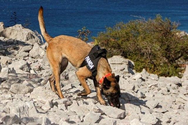 Anjing penemu makam kuno