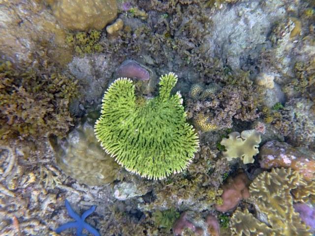 Snorkeling Raja Ampat