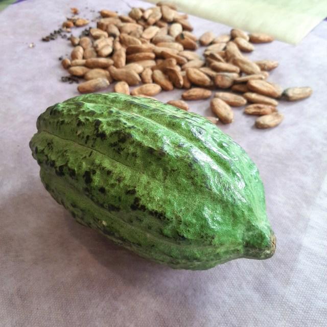 Apa Beda Istilah Kakao dan Kokoa dalam Dunia Cokelat? (108514)