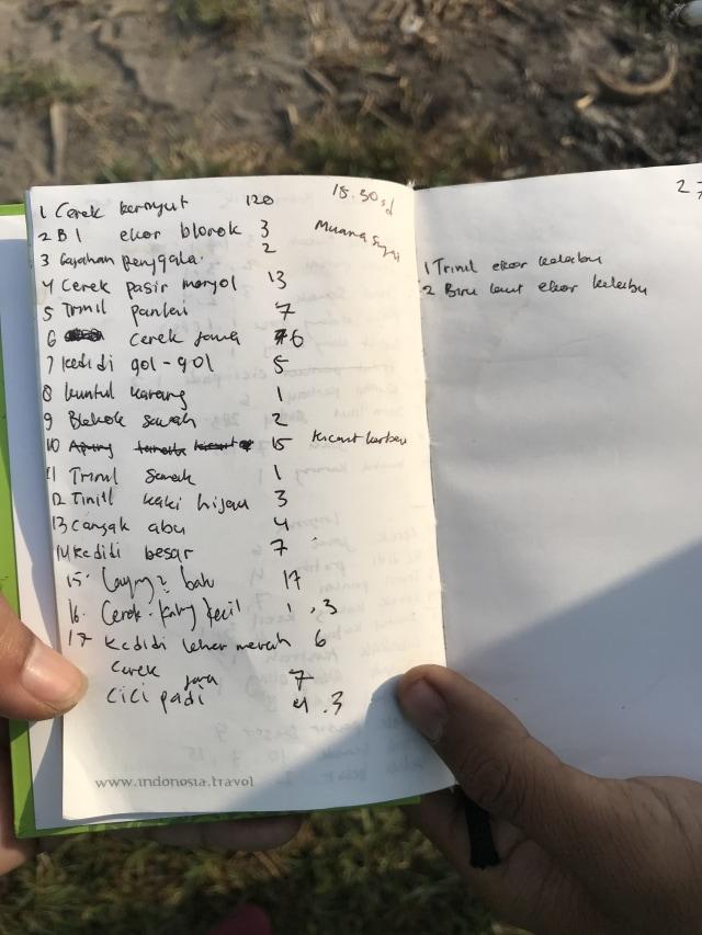 Cinta Mahasiswa untuk Burung Migran di Muara Kali Progo, Yogyakarta (615691)