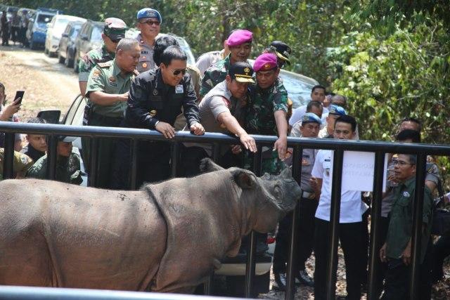 Gubernur: Lampung Jadi Benteng Terakhir Pelestarian Badak Sumatera (897)