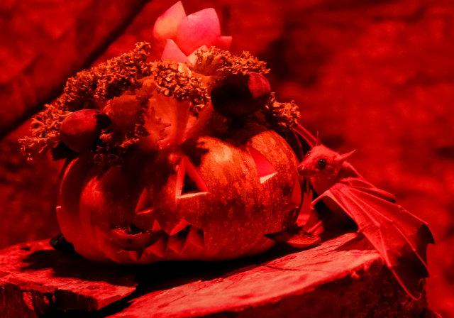 Perayaan Halloween di kebun binatang di Kiev, Ukraina, Kelelawar buah Mesir