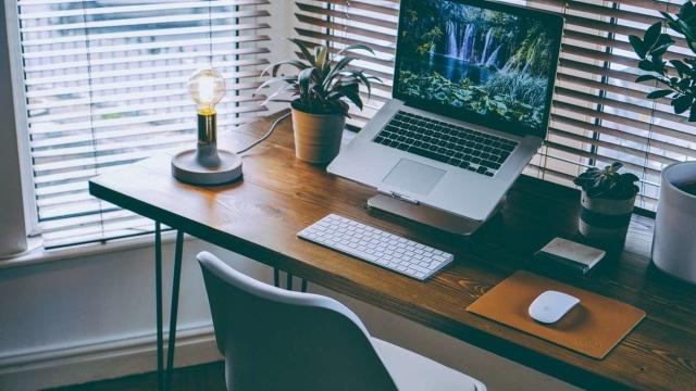 Tips Dekorasi: 5 Tanaman Hias untuk Meja Kerja Agar Tampak Manis  (4360)
