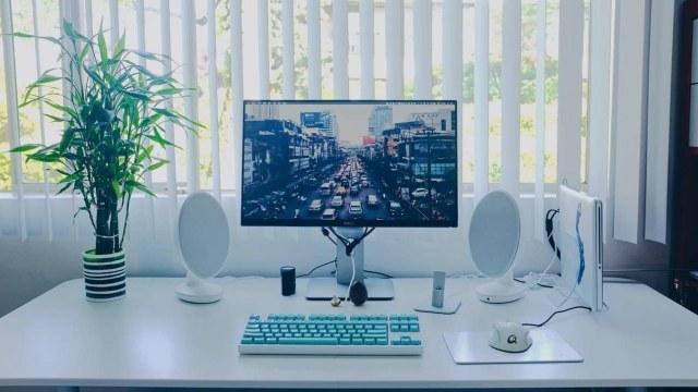 Tanaman hias meja kerja