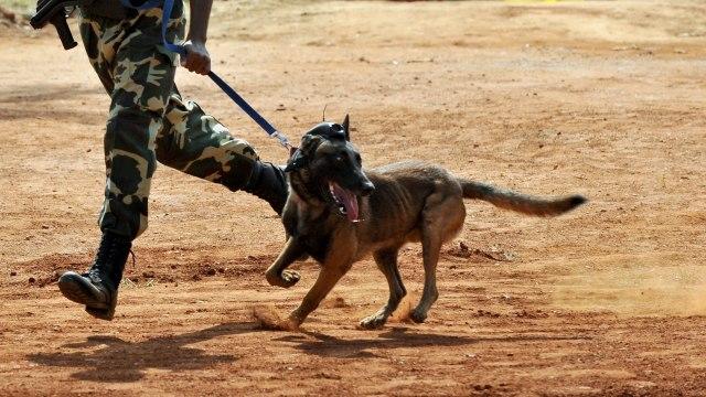 Donald Trump Undang Conan, Anjing Pemburu Baghdadi, ke Gedung Putih (570290)