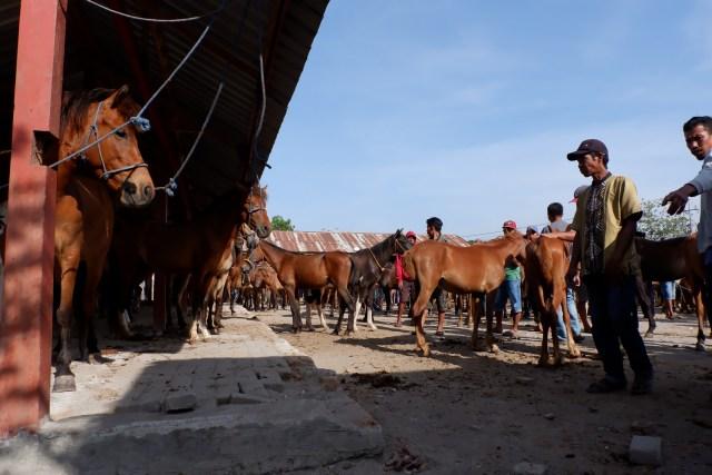 Menyantap Kuliner Khas Jeneponto, Sulsel, yang Dibuat dari Daging Kuda (480411)