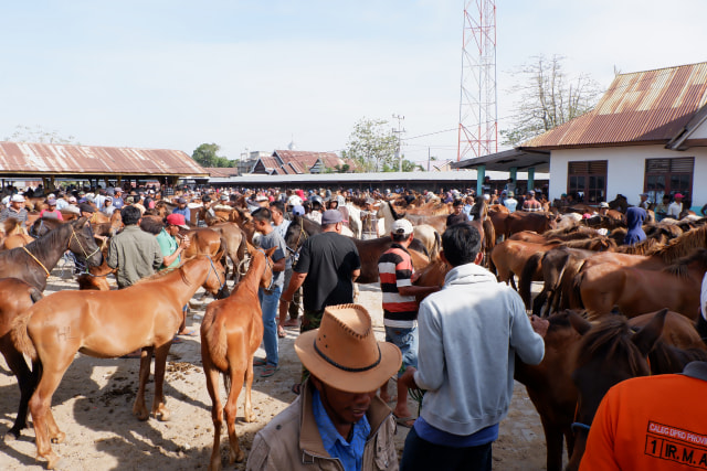 Menyantap Kuliner Khas Jeneponto, Sulsel, yang Dibuat dari Daging Kuda (480412)