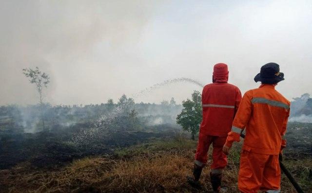 Status Tanggap Darurat Kebakaran Hutan di Sumsel Diperpanjang (69112)