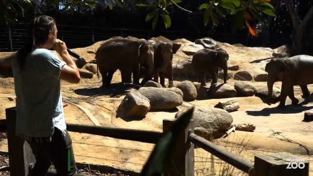 Konser untuk gajah.