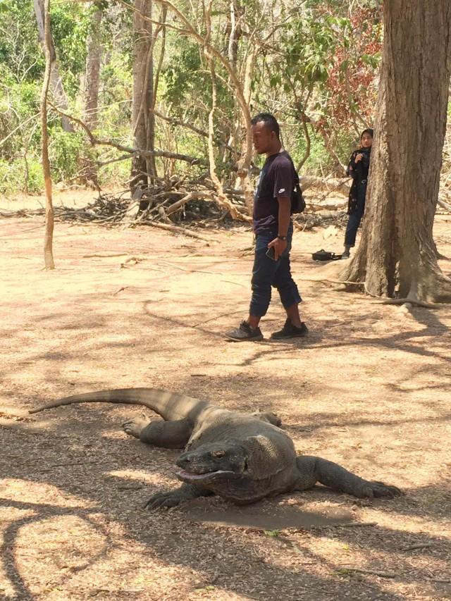 Wisata ala Jurassic Park di TN Komodo, Dirjen KSDAE: Saya Tidak Tahu dari Mana (117025)