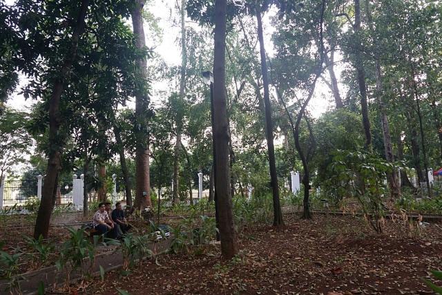 Hutan kota kawasan Senayan
