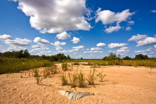Kruger_National_Park_Landscape_2.jpg