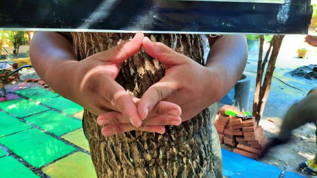 Memeluk Pohon: Merayakan Hari Pohon Sedunia ala Gorontalo (64892)