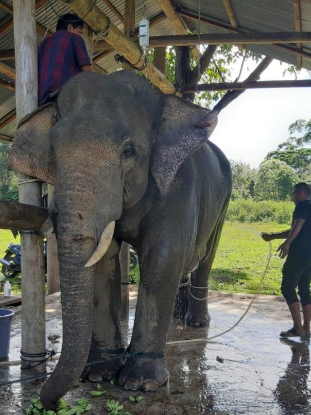Gajah, POTRAIT