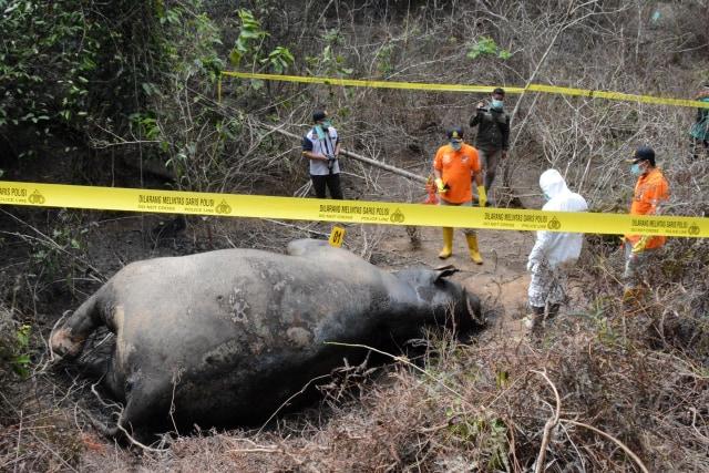 Gajah Aceh mati