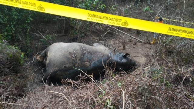 Gajah Sumatera liar yang ditemukan mati di kawasan perkebunan di Desa Seumanah Jaya Kecamatan Rantau Peureulak Aceh Timur. .jpeg