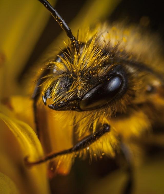 Gara-gara Pestisida, Sejumlah Spesies Serangga Terancam Punah (251132)