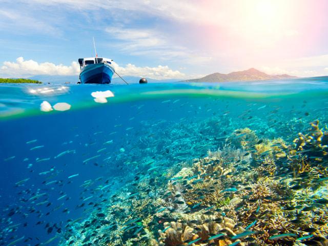 UNESCO Akui 3 Cagar Biosfer di Indonesia, Intip Ragam Keunikannya (117762)