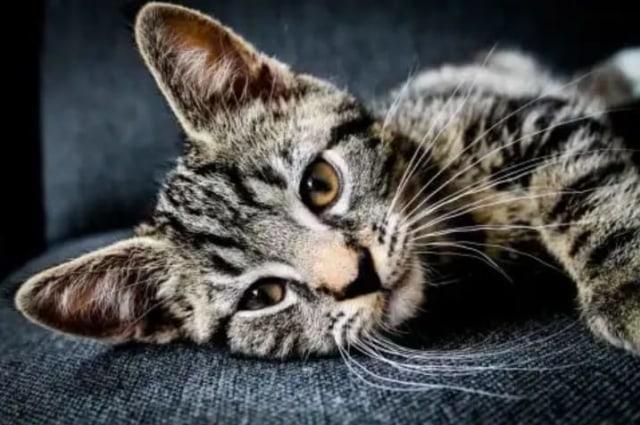 Polda Selidiki Kejadian Pembantaian Puluhan Kucing di Lampung (61635)