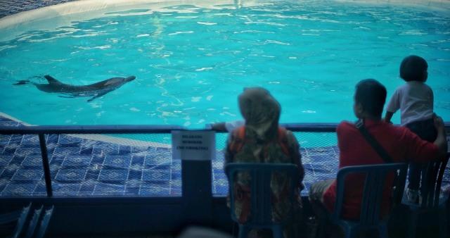 Foto: Sirkus Lumba-lumba di Palembang, Antara Polemik dan Edukasi (391596)
