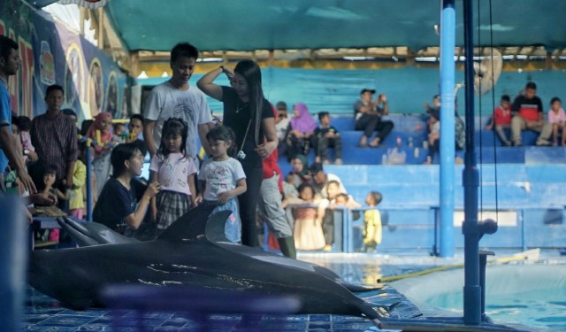 Foto: Sirkus Lumba-lumba di Palembang, Antara Polemik dan Edukasi (391597)