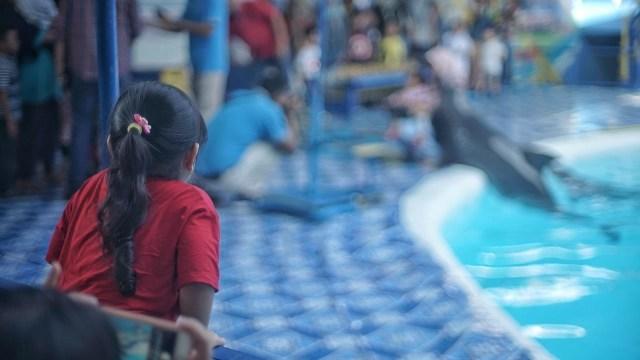 Foto: Sirkus Lumba-lumba di Palembang, Antara Polemik dan Edukasi (391599)