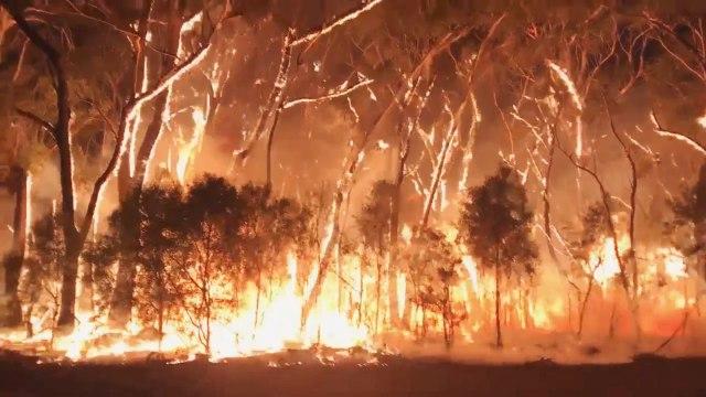 Foto: Duka Cita Jokowi Atas Kebakaran Dahsyat di Australia (134855)
