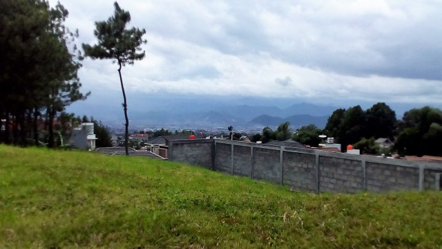 Ridwan Kamil: Pasutri di Jabar yang Mau Cerai Harus Sumbang 100 Pohon (27737)