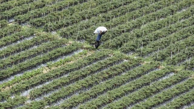 UU Cipta Kerja Diyakini Genjot Investasi Asing di Sektor Hortikultura (147851)