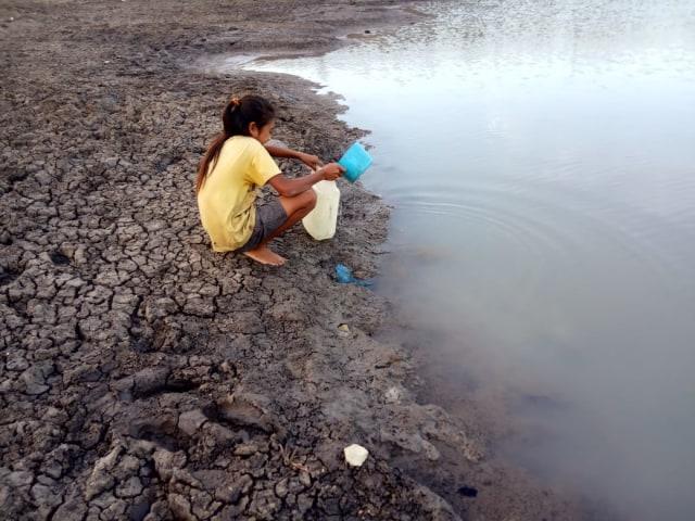 Manusia dan Ternak Minum Air Embung di Bonat, NTT  (69395)