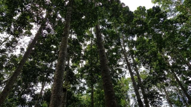 Rp 10 Miliar vs Pohon di Hutan, Pilih Mana? (123)