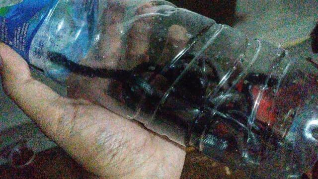 Deretan Penemuan Ular Kobra di Jakarta  (247867)