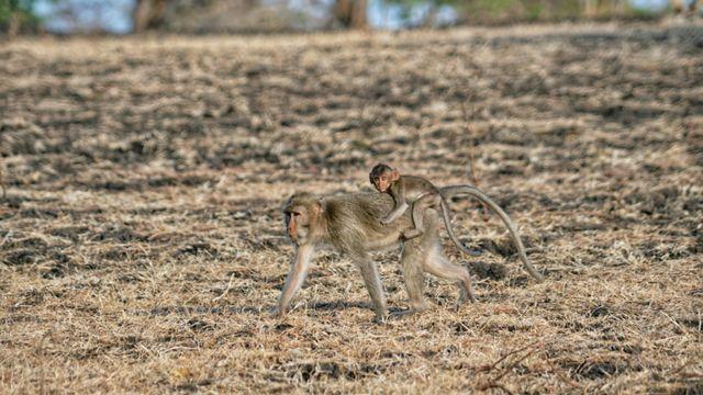 Taman Nasional Baluran Kembali Dibuka, Pengunjung Wajib Booking Online (219901)