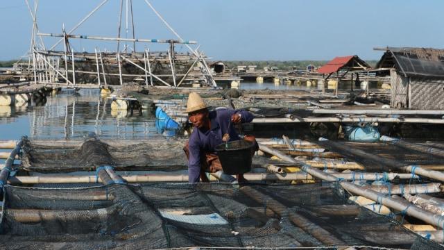 Nelayan lobster di Kabupaten Lobok, Nusa Tenggara Barat