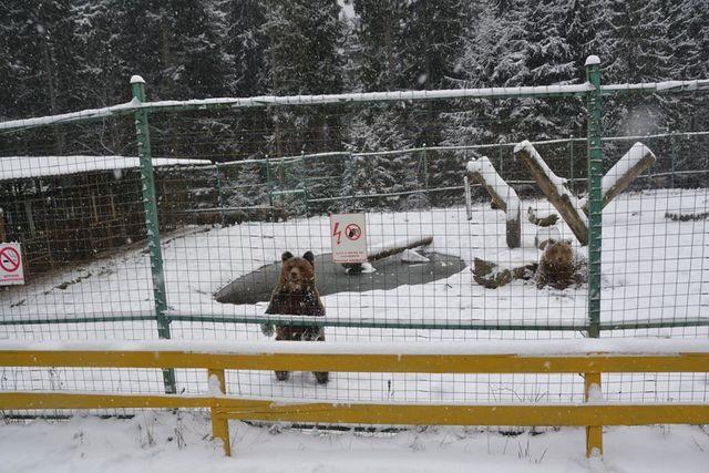 Rumitnya Perusahaan Kargo Kirim Beruang Langka Melintas Benua (23370)