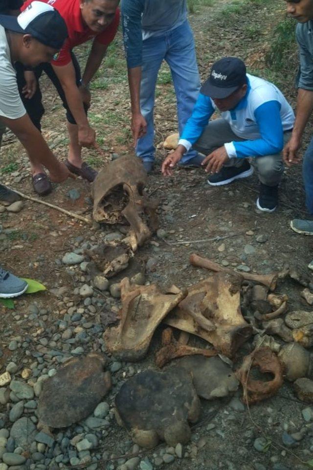 Gajah Mati di Aceh Jaya: Ditemukan Dua Ekor dan Tinggal Tulang (183887)