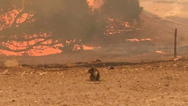 Foto: Duka Cita Jokowi Atas Kebakaran Dahsyat di Australia (134861)