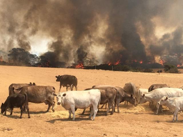 Foto: Duka Cita Jokowi Atas Kebakaran Dahsyat di Australia (134865)