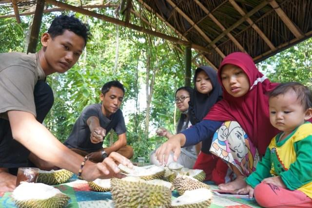 Wisata Durian Lampung Selatan: Bayar Rp 60 Ribu, Makan Sepuasnya (1083013)