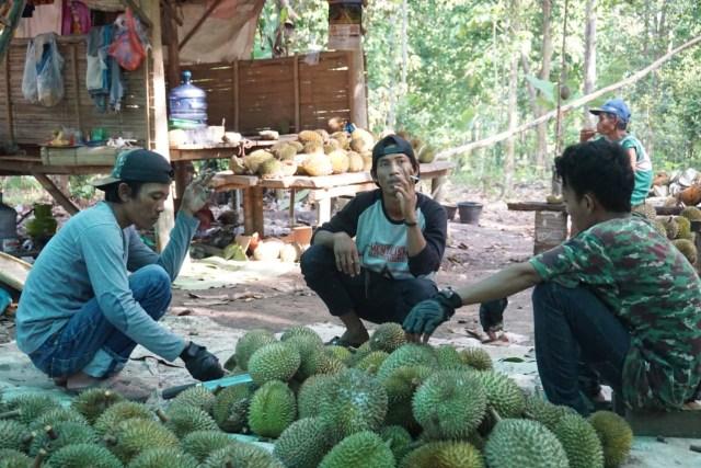 Wisata Durian Lampung Selatan: Bayar Rp 60 Ribu, Makan Sepuasnya (1083015)