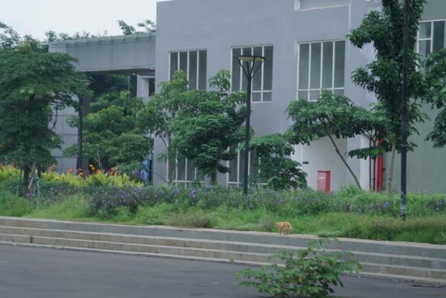 Foto: Lengangnya Wisma Atlet Kemayoran (69530)