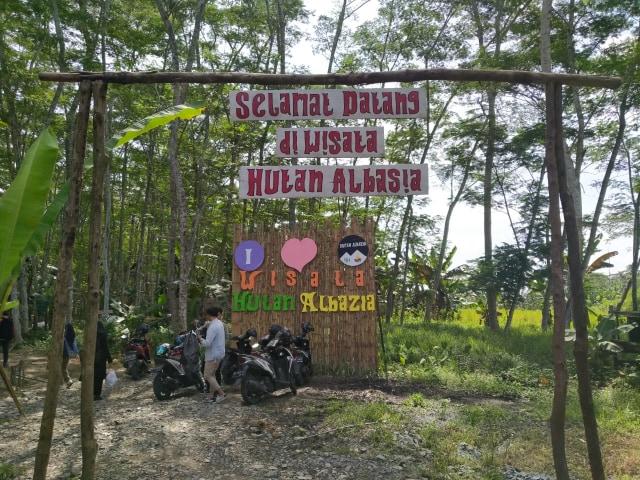 Menikmati Kesejukan Hutan Albasia, Wisata Alam di Kubu Raya, Kalbar (65167)