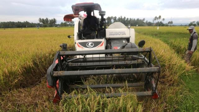 Jokowi Senang Produktivitas Padi Tinggi dan Harga Gabah Petani Naik (49301)