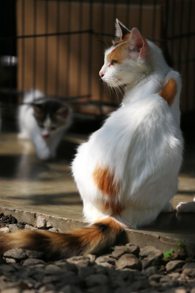 Kucing Ternyata Simpan Parasit Berbahaya, Bisa Ubah Orang Jadi Zombie? (90746)